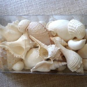 Sea Shells White Variety